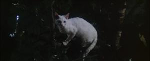 CW-STM-cat-rescue-screenshot-107