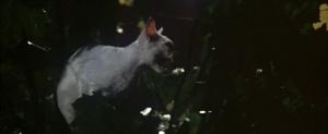 CW-STM-cat-rescue-screenshot-112