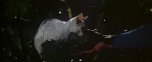 CW-STM-cat-rescue-screenshot-114