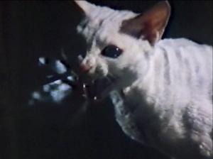 CW-STM-cat-rescue-screenshot-77