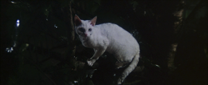 CW-STM-cat-rescue-screenshot-108