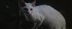 CW-STM-cat-rescue-screenshot-109