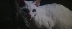 CW-STM-cat-rescue-screenshot-110