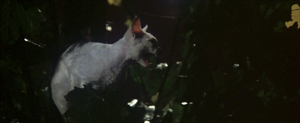 CW-STM-cat-rescue-screenshot-111