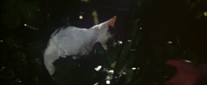 CW-STM-cat-rescue-screenshot-113