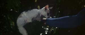 CW-STM-cat-rescue-screenshot-116