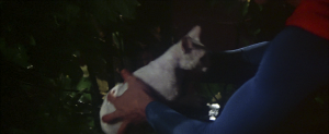 CW-STM-cat-rescue-screenshot-119