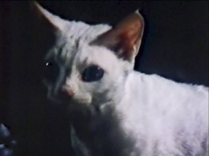 CW-STM-cat-rescue-screenshot-78