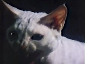 CW-STM-cat-rescue-screenshot-79